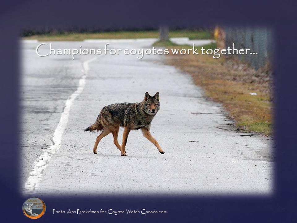Champions For Coyotes Work Together