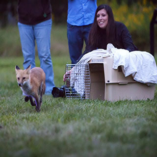Rebecca Rothwell, Rehabilitation Therapist, Coyote Watch Canada