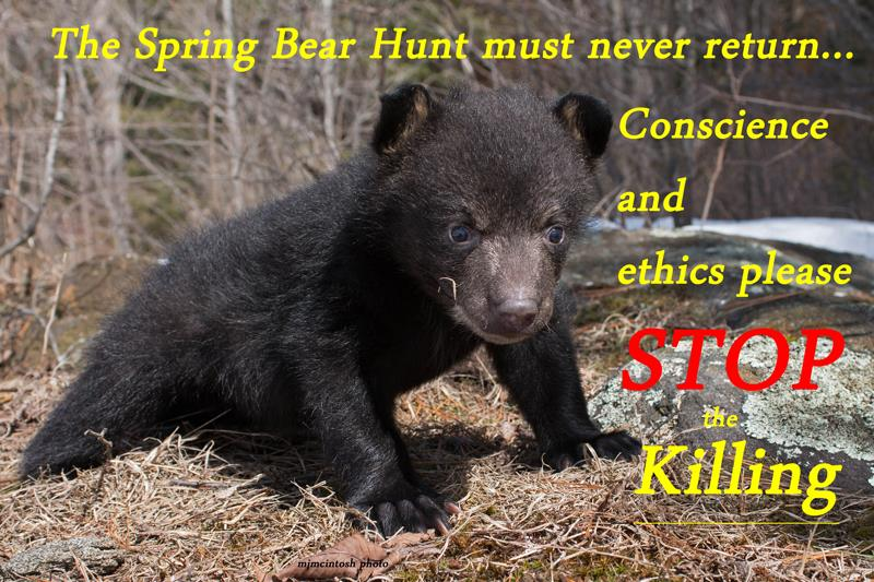Reinstating The Spring Bear Hunt Is Not The Answer